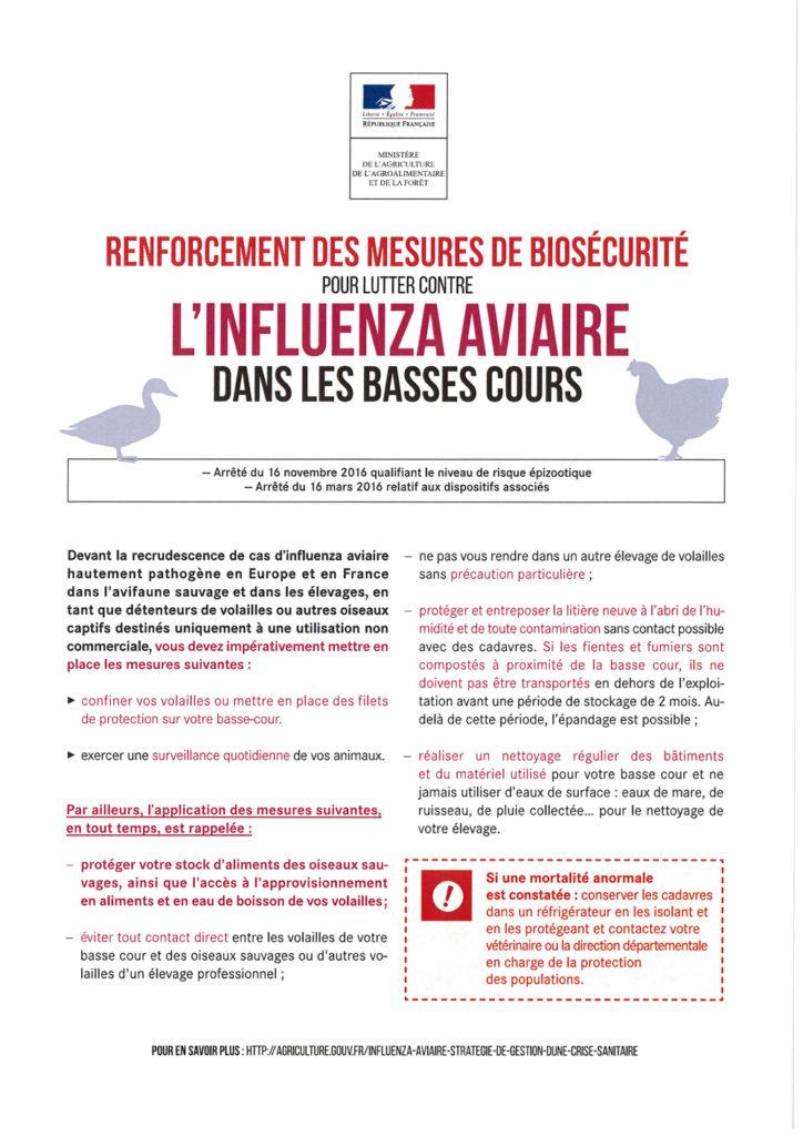 Influenza aviaire dans les basses cours